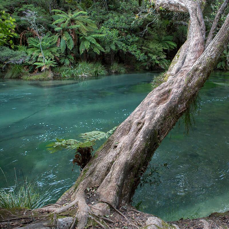 Tarawera Falls Hiking Trail